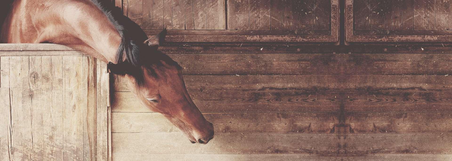 Saddle fitting - ajustement de selle